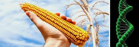 #Evil #Monsanto Gets the First #CRISPR License to Modify Crops #GMO #MAM #Bayer | Messenger for mother Earth | Scoop.it