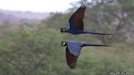 Birds 'show value of conservation' | Conservation Biology, Genetics and Ecology | Scoop.it