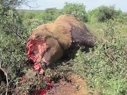Kenya: Entire family of 11 elephants wiped out VIDEO | Biodiversity IS Life  – #Conservation #Ecosystems #Wildlife #Rivers #Forests #Environment | Scoop.it
