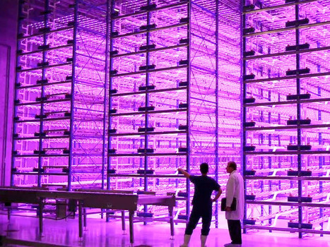 The future of urban farming is pink   Urban- city- vertical farming - Green cities   Scoop.it