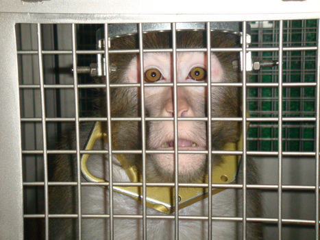 Animal Experiments: Overview | research project | Scoop.it