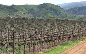 Study: California can kiss its vineyards goodbye | Climate change challenges | Scoop.it