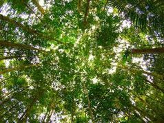 Le Brésil veut compter tous les arbres de l'Amazonie | SmartPlanet.fr | Faire Territoire | Scoop.it