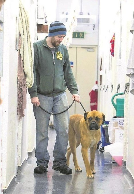 Animal welfare services in Ireland are under-funded and over-stretched   Animals R Us   Scoop.it
