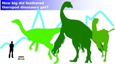 Environment trumps theory in feathered dinosaur size study - Examiner.com | Palaeontology News | Scoop.it