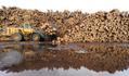Come ottenere cibo dal legno - La Voce della Russia   CIBO E DINTORNI   Scoop.it