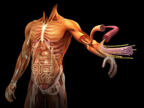 Grandes infografías del interior del cuerpo humano | Ideas y recursos tic para el aula | Scoop.it