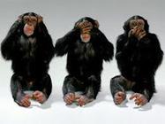 Comportamiento humano vs animal   En el mismo barco: los blogs del Núcleo imitación, lenguaje y sociabilidad   Scoop.it