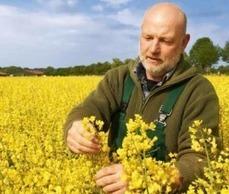 Vier neue Sorten von Limagrain | Agrar | Scoop.it