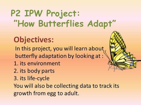 P2 IPW Project on Butterfly Adaptation | fluency; reading text | Scoop.it