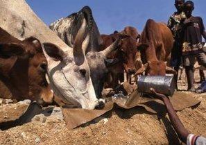 Éthiopie : accès à l'eau et au développement agricole dans le Hararghe – SECOURS CATHOLIQUE – Caritas France | Action internationale | Scoop.it