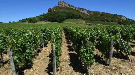 France: désolation dans des vignes de l'est et du sud-ouest après la grêle | Nature to Share | Scoop.it