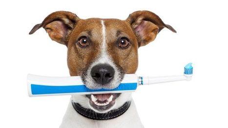 Chien et chat: attention à l'hygiène dentaire | Actualités de l'assurance | Scoop.it