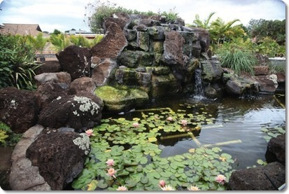 Commercial aquaponics in Hawaii | Restorative Developments | Scoop.it