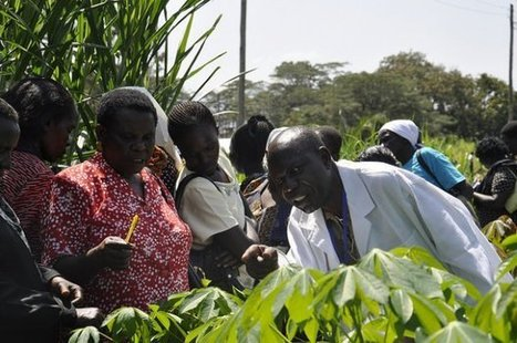 Why developing gender sensitive policy responses into Africa's climate change adaptation and mitigation strategies in agriculture is a priority. | Agriculture, Climate & Food security | Scoop.it
