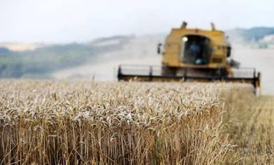 Droughts could hit food production in England in 2020s, report warns | Nature Animals humankind | Scoop.it