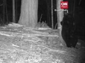 Feels so good! Bear caught on camera scratching itch (VIDEO) - ABC15.com (KNXV-TV) | Surveillance Products | Scoop.it