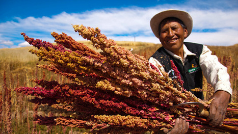 Peru: The Land Of Superfoods | Rainforest EXPLORER:  News & Notes | Scoop.it