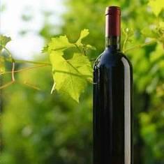 Étude de la conservation des vins en bouteille -Institut français de la vigne et du vin | Winemak-in | Scoop.it