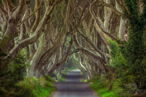 The Fantastic Real-Life Filming Locations Of Game Of Thrones | Digital Cinema - Transmedia | Scoop.it