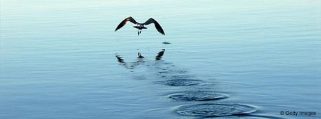 Oubliez l'océan bleu, préférez l'océan gris | Web information Specialist | Scoop.it