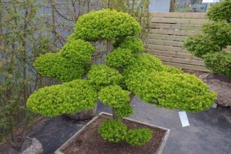 Tony G. on Twitter | Japanese Gardens | Scoop.it