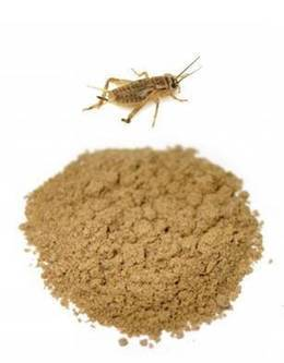 Cricket as Food: The perceptions and barriers to entomophagy and the potential for widespread incorporation of cricket flour in American Diets | Entomophagy, insects for feed and pharma | Scoop.it