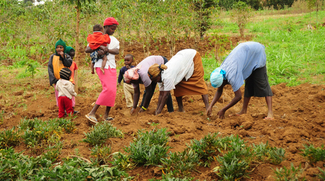 The Role of Rural Women in Agriculture | Research Capacity-Building in Africa | Scoop.it