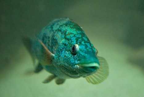 Scientists Uncover Key To Adaptation Limits Of Ocean Dwellers - RedOrbit | Marine | Scoop.it