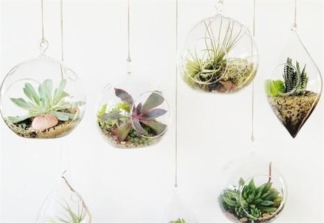 Idee per una casa eco-deco-green | fiori e piante, curiosità e notizie | Scoop.it