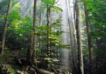 Study reveals effect of habitat fragmentation on forest carbon cycle | Sustain Our Earth | Scoop.it