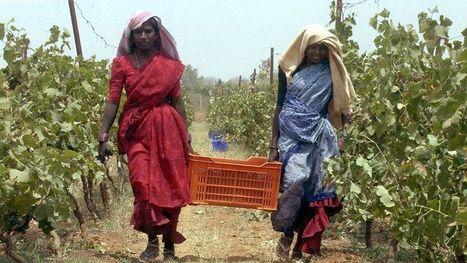 Moët Hennessy vinifie du Chandon en Inde - Le Figaro   VINS ET SPIRITUEUX   Scoop.it