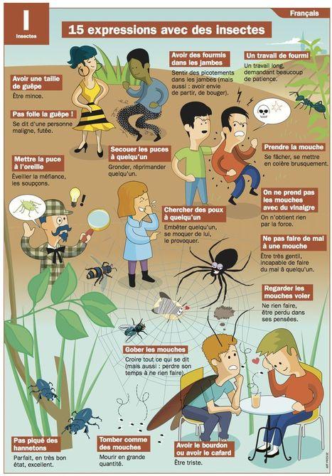 15 expressions avec des insectes | FLE, TICE & éducation aux médias | Scoop.it