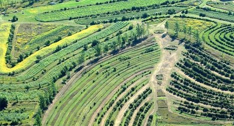 Agroforestry: Healing Food Systems and Fighting Climate Change - Organic Connections | Farming, Forests, Water, Fishing and Environment | Scoop.it