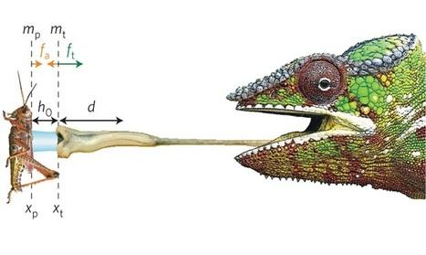 """Zoologie : le caméléon et son atout """"bave gluante""""   EntomoNews   Scoop.it"""