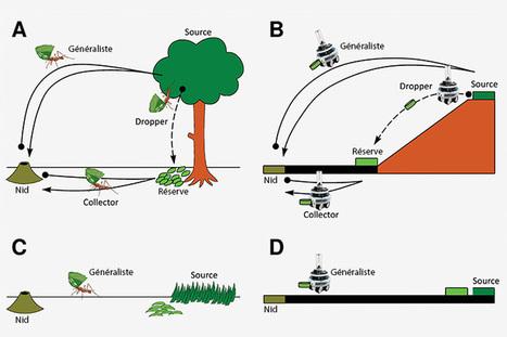 Décidément, les fourmis savent travailler efficacement | Coaching de l'Intelligence et de la conscience collective | Scoop.it