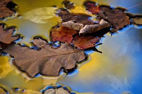 10 Amazing Fall Foliage Photos - Nature Conservancy Blogs | Nature Photos | Scoop.it
