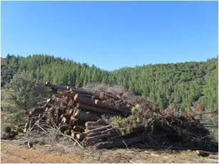 Logística y Gestión del aprovechamiento de biomasa mediante SIG ¡Edición Abril 2015!   BIOMASA   Scoop.it