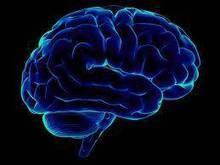 Brain Shape Affects Cocaine Addiction | Drug Addiction | Scoop.it