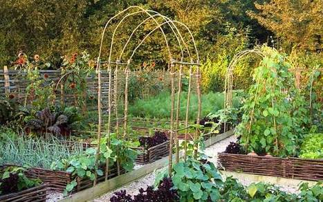 Gardening calendar: support climbers and sow parsnips | Gardening | Scoop.it