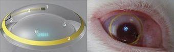 Realidad Aumentada en lentes de contacto, primeras pruebas con conejos | Realidad aumentada | Scoop.it
