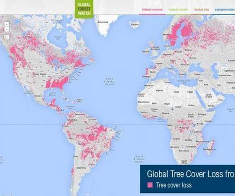 Google offers bird's-eye view of global deforestation - UPI.com (blog) | Amazon Deforestation: Issue Study | Scoop.it