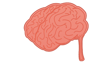 No Brain is Too Small.....really | Resource Bank: Science and Maths | Scoop.it