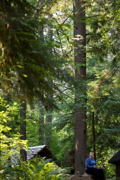 How tech workers are turning to the Japanese practice of 'forest bathing' to unplug - The Washington Post | Digitalised Minds | Scoop.it