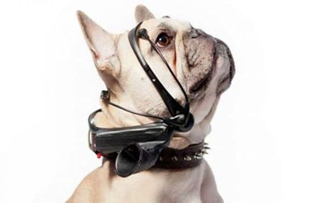 Inventan gadget que traduce los ladridos de los perros - El Espectador Uruguay | Web-On! Curiosidades | Scoop.it