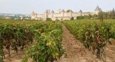 Transmission viticole : profiter du bail à long terme | Le Vin et + encore | Scoop.it