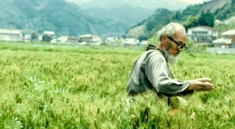Les quatre principes de l'agriculture sauvage selon Fukuoka | pour mon jardin | Scoop.it
