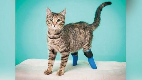 Meet 5 Incredible 'Bionic' Pets | The Animal-Human Bond | Scoop.it