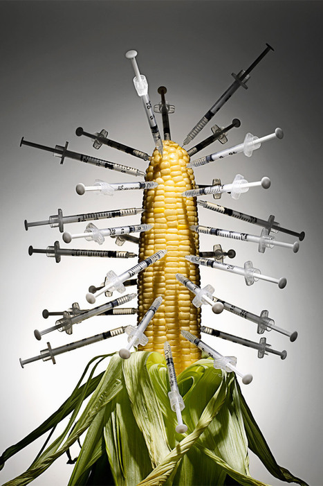Genetically Modified Corn - Allergies to #GMO Corn - ELLE #health #cancer #ADHD #Crohn | Messenger for mother Earth | Scoop.it