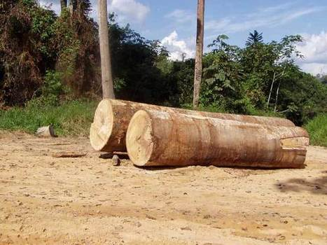 Amazon Deforestation: Earth's Heart and Lungs Dismembered | Research | Scoop.it